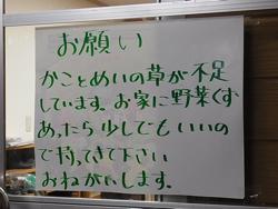 kako_may.jpg