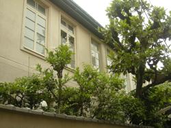 umebachi.jpg